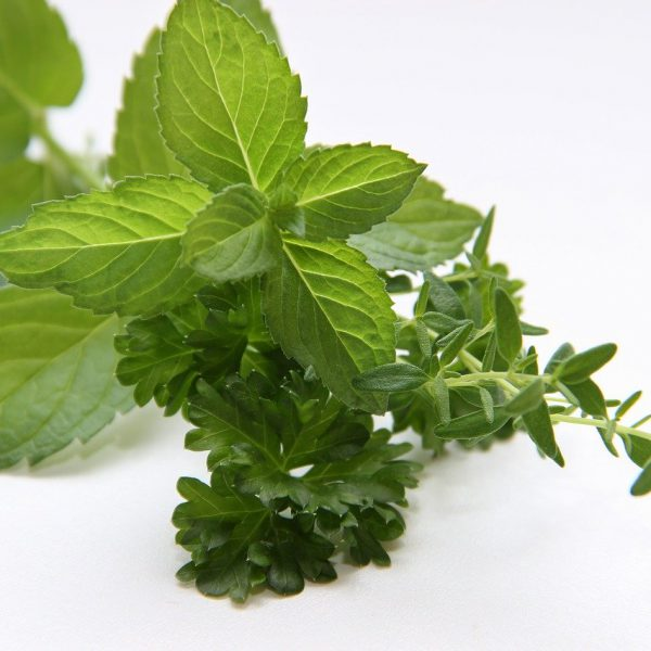 herbs, mint, thyme