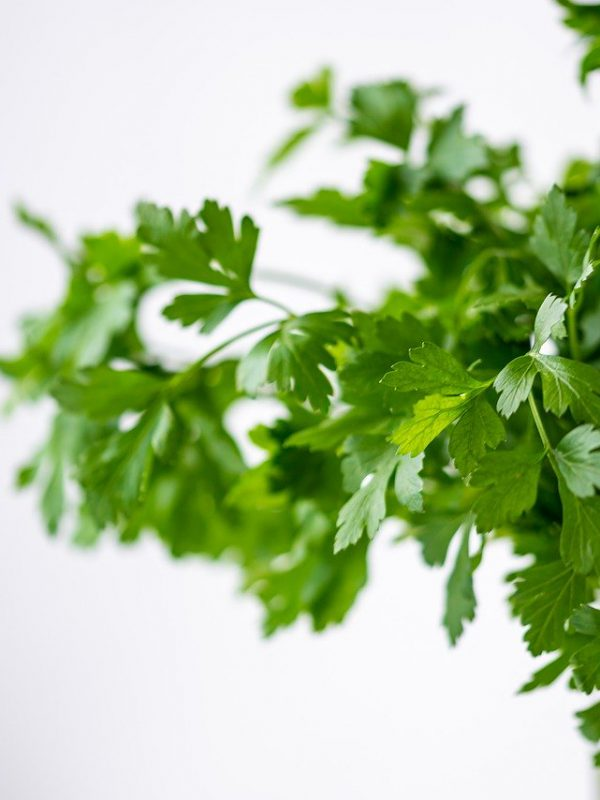 parsley, green, healthy