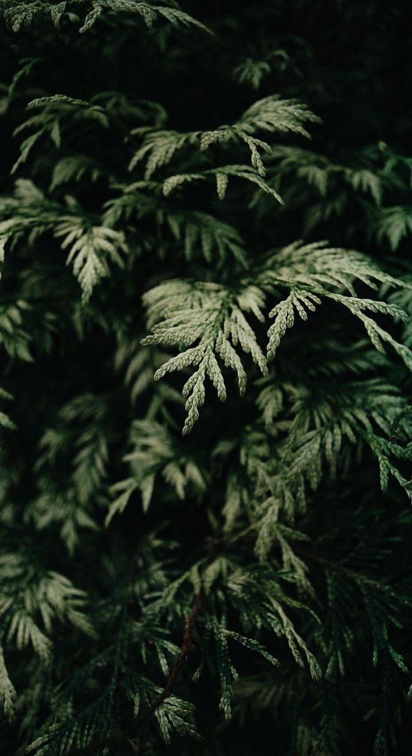 plants, moody, nature